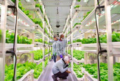 Vertical Roots объявляет об открытии новой крытой фермы в Атланте